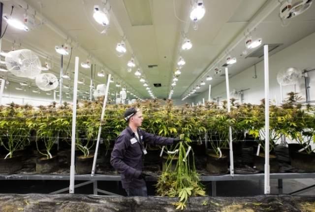 Terratech Investors Can Buy Shares Of Marijuana Dispensary